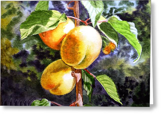 Harvest Art Greeting Cards - Apricots in the Garden Greeting Card by Irina Sztukowski