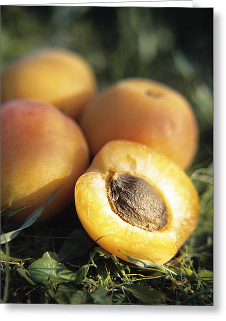 Apricot Greeting Cards - Apricots Greeting Card by Veronique Leplat
