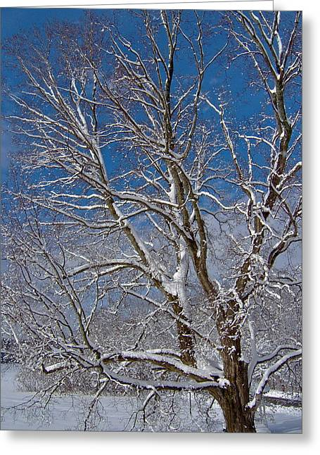 Snow-covered Landscape Greeting Cards - April Winter Surprise 19 Greeting Card by George Ramos