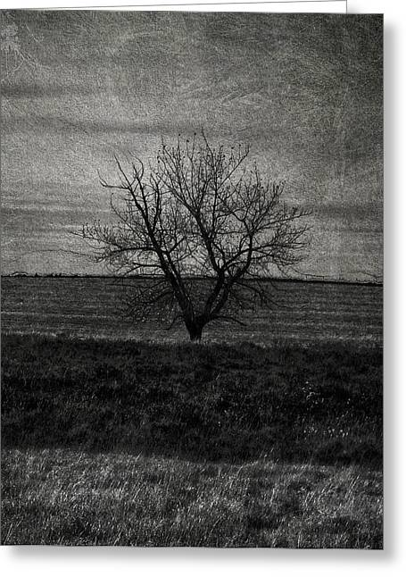 Edmonton Photographer Greeting Cards - Arbre Solitaire  Greeting Card by Jerry Cordeiro