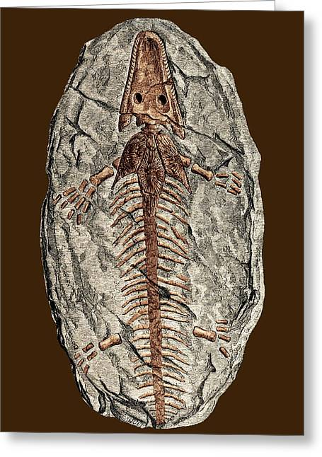 Mines And Miners Greeting Cards - Archegosaurus Decheni, Amphibian Fossil Greeting Card by Sheila Terry