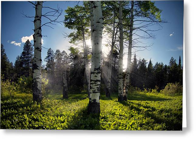Caribou Greeting Cards - Aspen Light Greeting Card by Leland D Howard