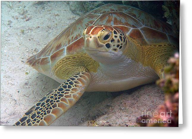Undersea Photography Greeting Cards - At Rest Greeting Card by Li Newton