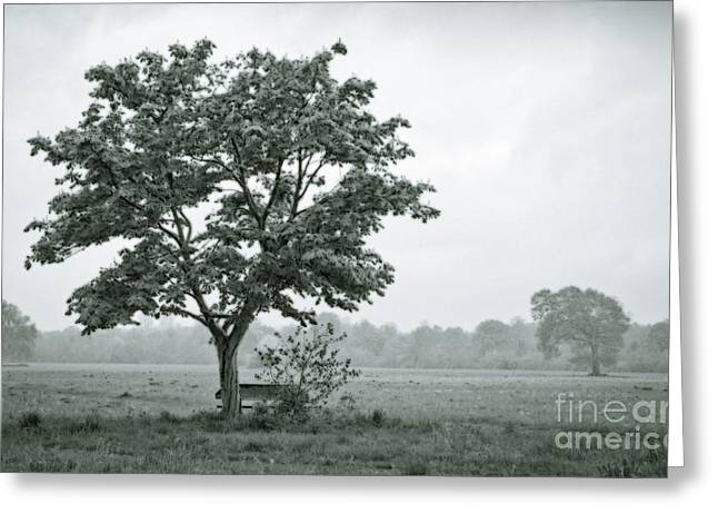 August In England Greeting Card by Andy Smy