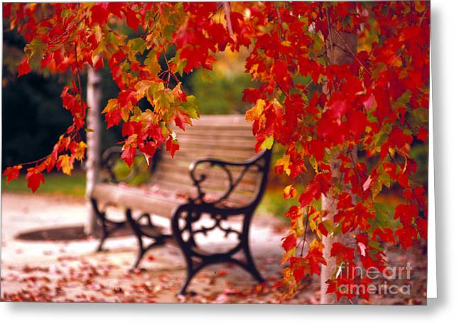 Mike Nellums Greeting Cards - Autumn bench Greeting Card by Mike Nellums
