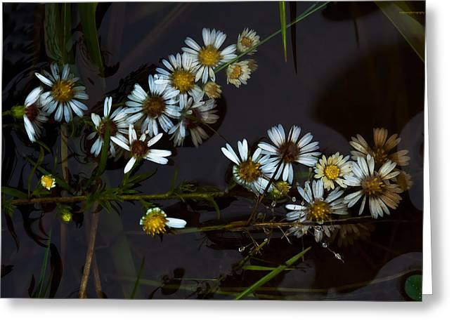 Aster Greeting Cards - Autumn Farewell Greeting Card by Ron Jones