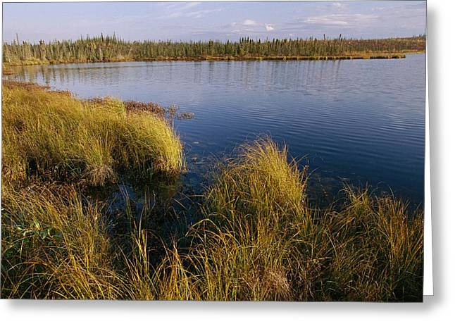 Willow Lake Greeting Cards - Autumn Foliage Surrounds Campbell Lake Greeting Card by Raymond Gehman