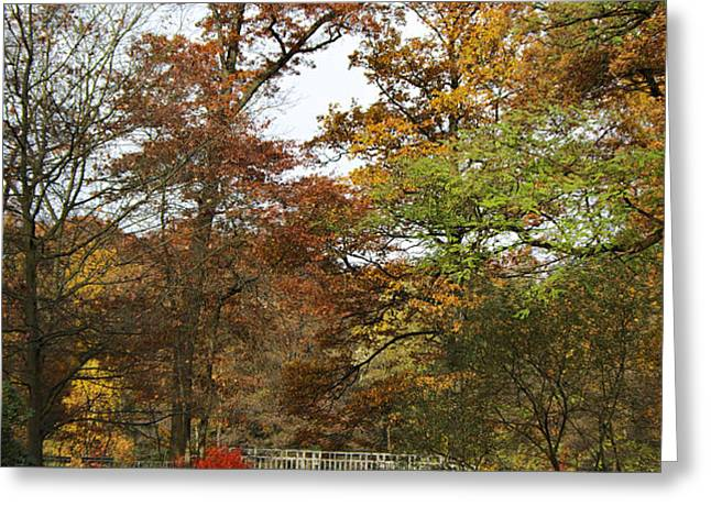 Autumn forest Greeting Card by Angela Doelling AD DESIGN Photo and PhotoArt