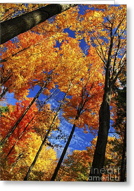 Shining Light Greeting Cards - Autumn forest Greeting Card by Elena Elisseeva