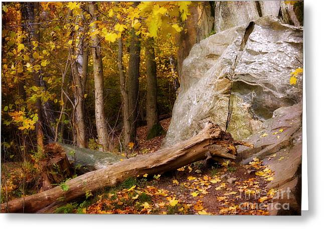 Autumn Scenes Greeting Cards - Autumn Forest Greeting Card by Lutz Baar