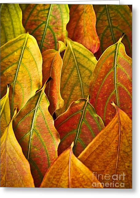 Leaf Change Greeting Cards - Autumn leaves arrangement Greeting Card by Elena Elisseeva