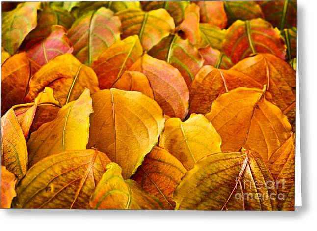 Leaf Change Greeting Cards - Autumn leaves  Greeting Card by Elena Elisseeva