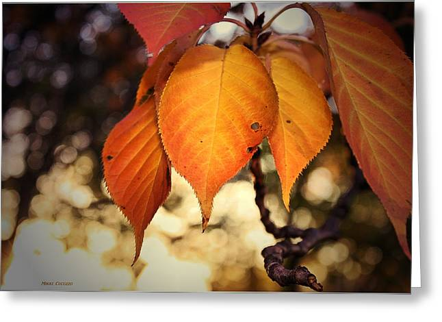 Mikki Cucuzzo Greeting Cards - Autumn Leaves Greeting Card by Mikki Cucuzzo