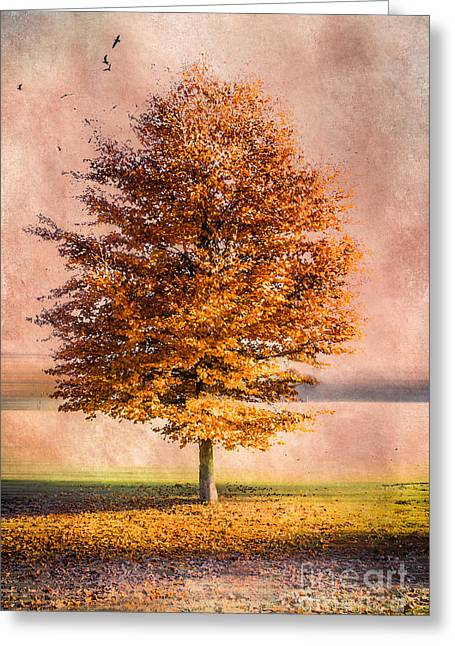 Hannes Cmarits Greeting Cards - Autumn Light Greeting Card by Hannes Cmarits