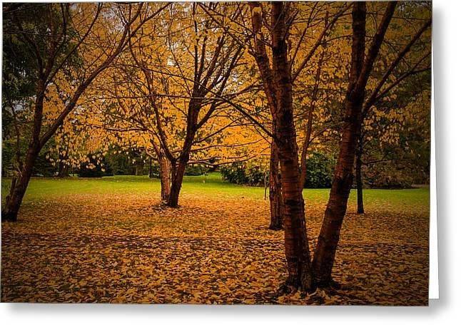 Autumn Greeting Card by Micael  Carlsson