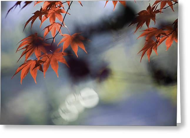 Autumn Red  Greeting Card by Rob Travis