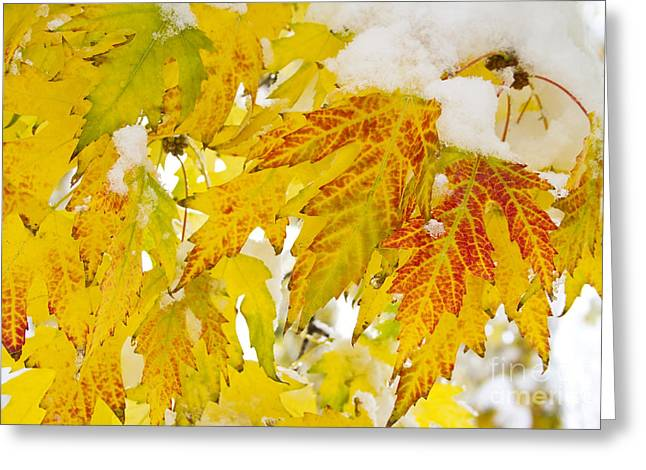 Snow Tree Prints Greeting Cards - Autumn Snow  Greeting Card by James BO  Insogna