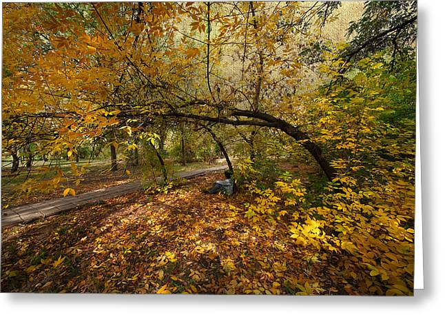 Trees In Autumn Greeting Cards - Autumn Tree Greeting Card by Svetlana Sewell