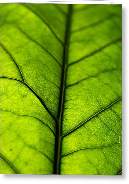 Avocado Green Greeting Cards - Avocado Leaf 3 Greeting Card by Jessica Velasco