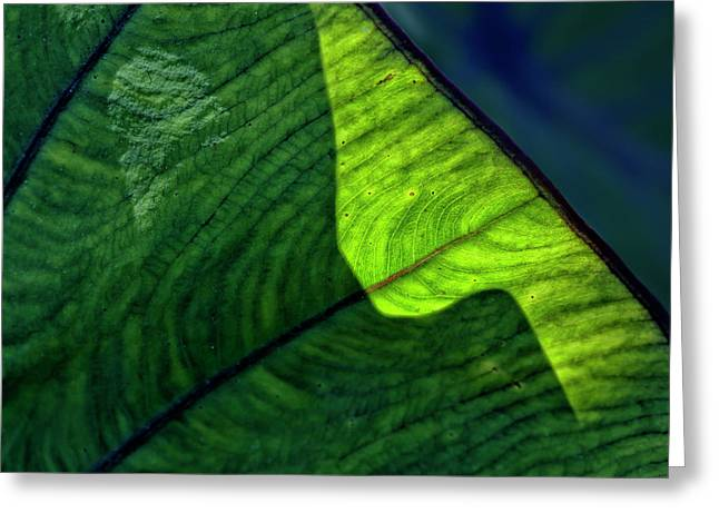 Back Lighting Greeting Cards - Back Lit Leaf Greeting Card by Robert Ullmann