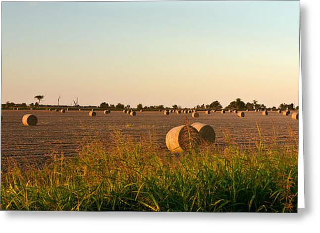 Arkansas Greeting Cards - Bales in Peanut Field 2 Greeting Card by Douglas Barnett