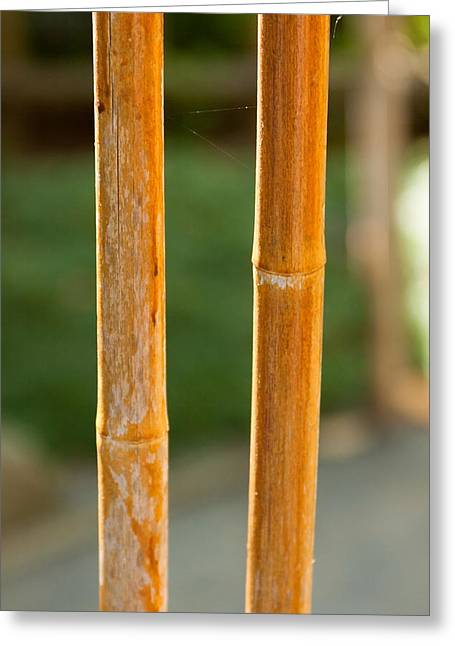 Bamboo Fence Greeting Cards - Bamboo fence with a strand of spiderweb. Greeting Card by Andrei Orlov