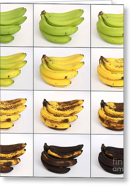 Yellow Bananas Greeting Cards - Banana Ripening Sequence Greeting Card by Ted Kinsman