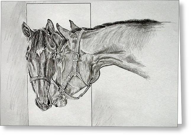 Bred Drawings Greeting Cards - Barbaro Greeting Card by Debbie Sampson