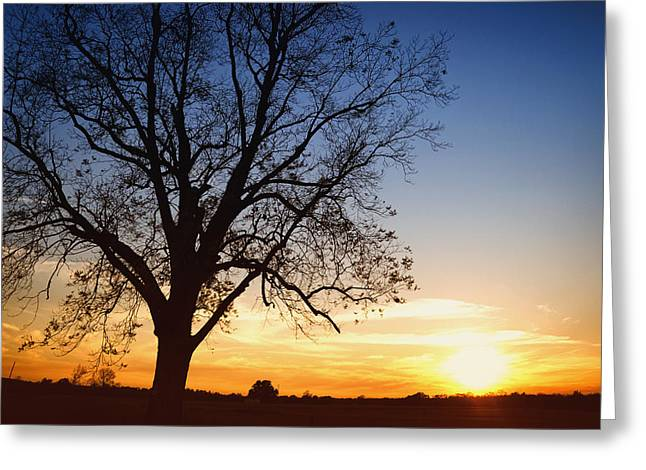 Reverence Greeting Cards - Bare Tree At Sunset Greeting Card by Skip Nall