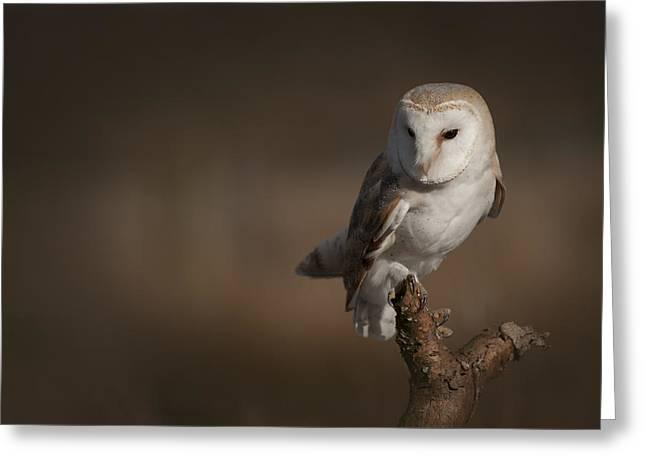 Barn Owl Greeting Card by Andy Astbury