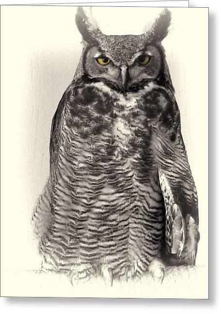 Different Owl Greeting Cards - Barn Owl  Greeting Card by Debra     Vatalaro