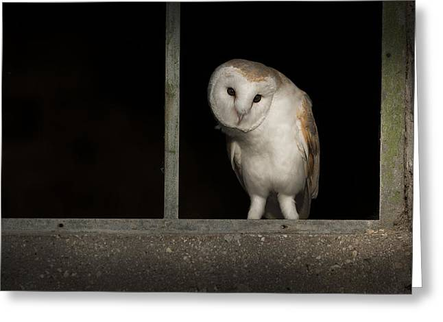 Out-building Greeting Cards - Barn Owl in Window Greeting Card by Andy Astbury
