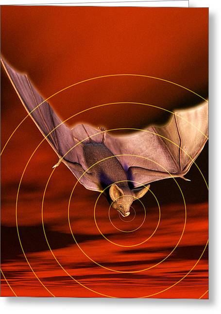 Biomechanics Greeting Cards - Bat Sonar Greeting Card by Victor Habbick Visions
