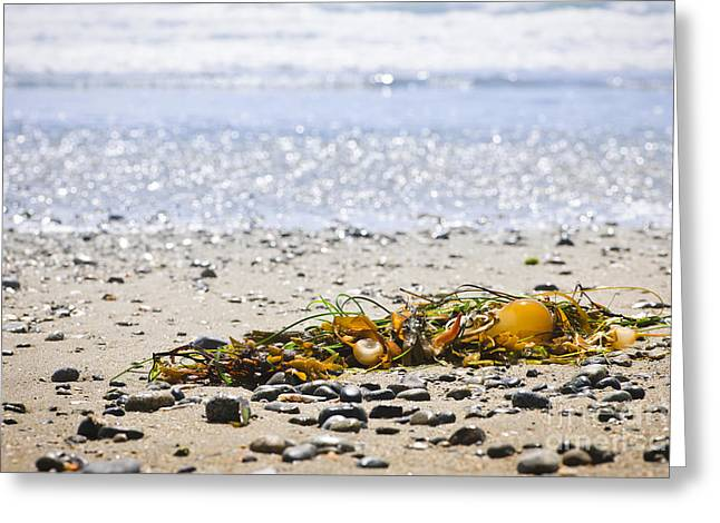 Beach detail on Pacific ocean coast Greeting Card by Elena Elisseeva