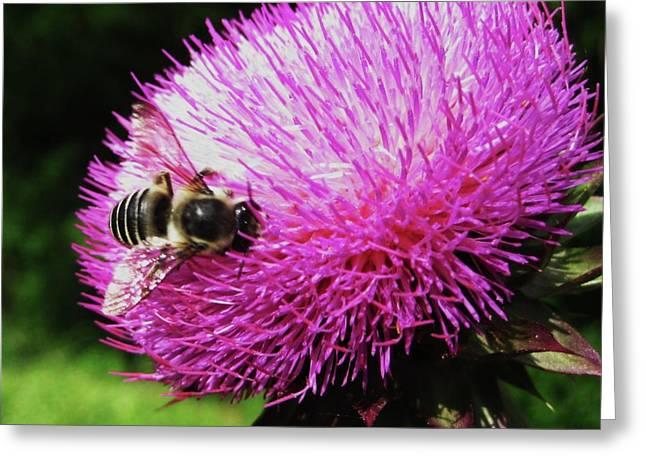 Dallas Pyrography Greeting Cards - Bee Greeting Card by Diana Moya