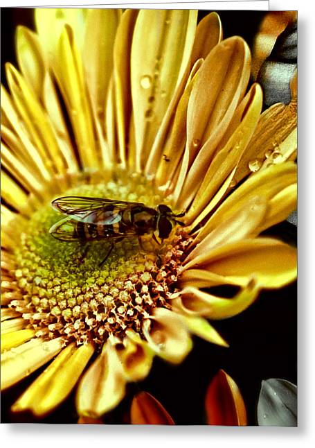 Insect Greeting Cards - Bee Greeting Card by Kelly Rader