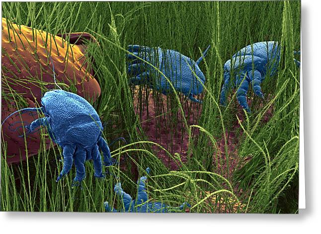 Quartet Greeting Cards - Bee Mites, Sem Greeting Card by Steve Gschmeissner