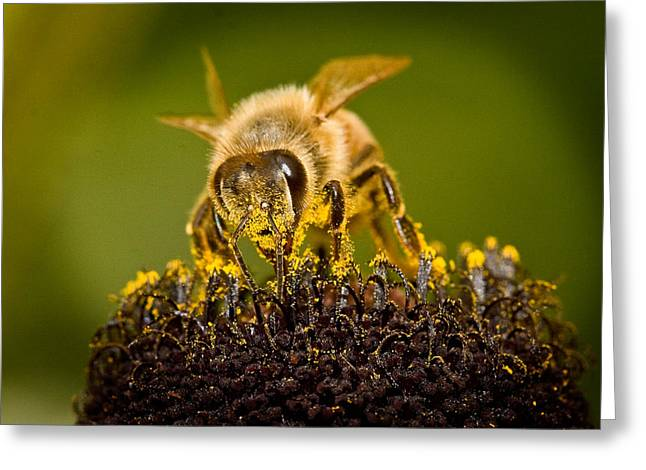 Jean Noren Greeting Cards - Bee there Greeting Card by Jean Noren