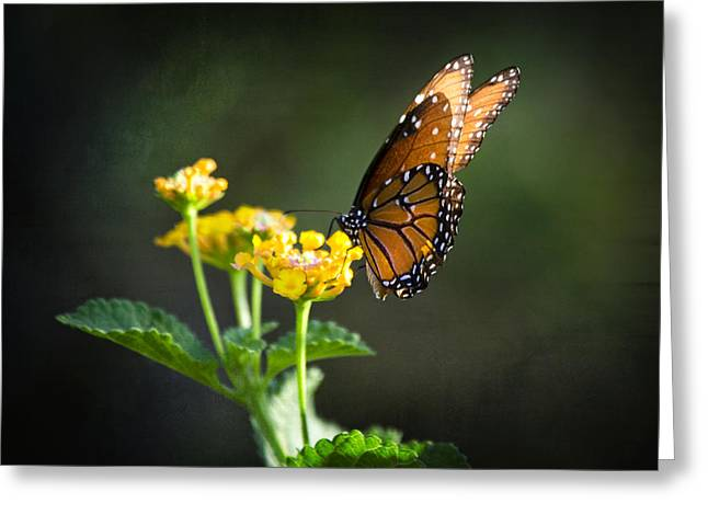 Queen Butterfly Greeting Cards - Befitting a Queen  Greeting Card by Saija  Lehtonen