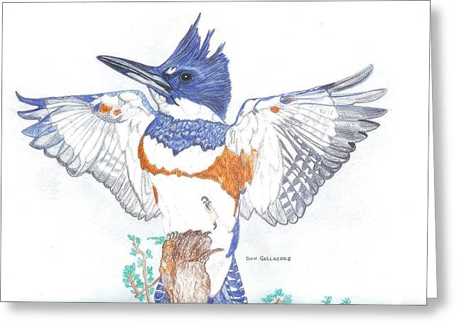 Belt Drawings Greeting Cards - Belted Kingfisher Greeting Card by Don  Gallacher