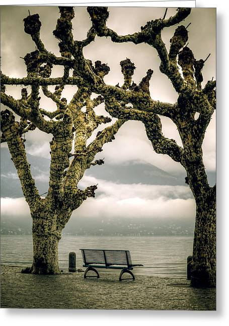 Plane Trees Greeting Cards - Bench Under Plane Trees Greeting Card by Joana Kruse