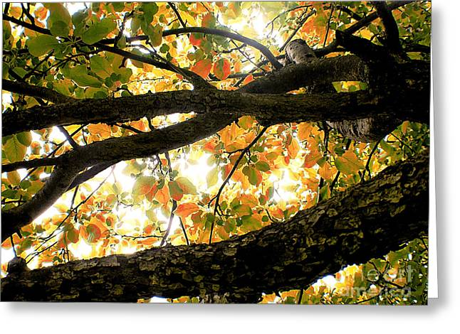 Beneath The Autumn Wolf River Apple Tree Greeting Card by Angie Rea
