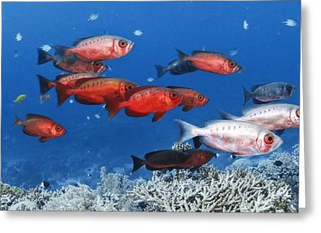 Biology Greeting Cards - Bigeye Fish Greeting Card by Alexander Semenov