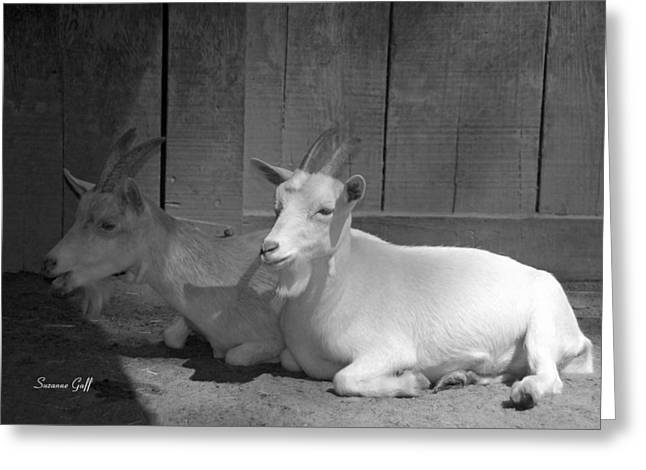 Goat Photographs Greeting Cards - Billy Goat Siesta Greeting Card by Suzanne Gaff