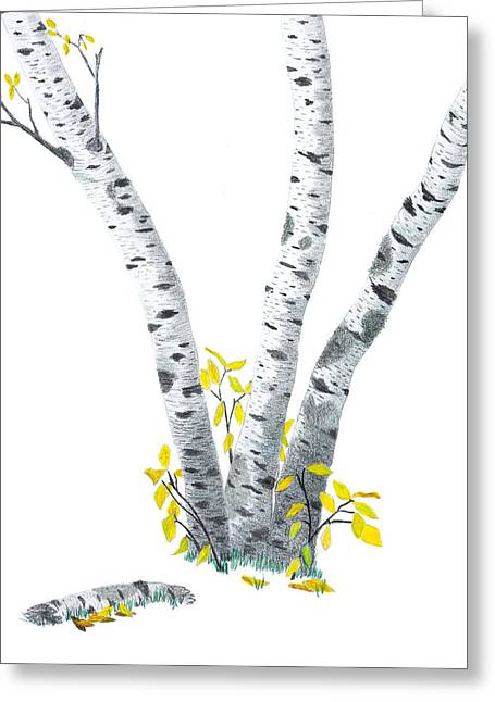 Birch Tree Drawings Greeting Cards - Birches Greeting Card by Garry McMichael