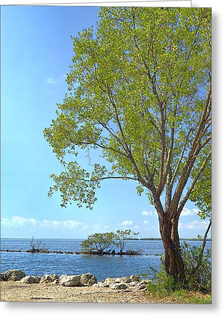Biscayne National Park-1 Greeting Card by Rudy Umans