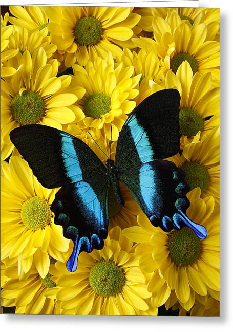 Yellow Butterfly Greeting Cards - Black and blue butterfly Greeting Card by Garry Gay
