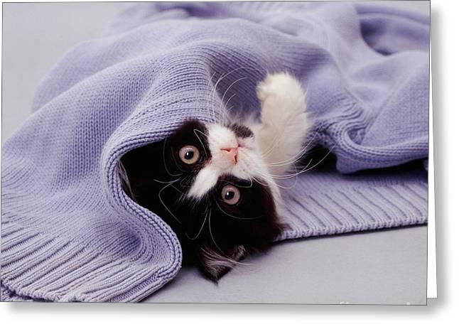 Tuxedo Greeting Cards - Black-and White Kitten Greeting Card by Jane Burton