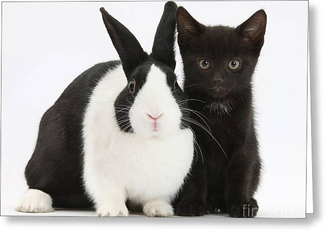 House Pet Greeting Cards - Black Kitten And Dutch Rabbit Greeting Card by Mark Taylor