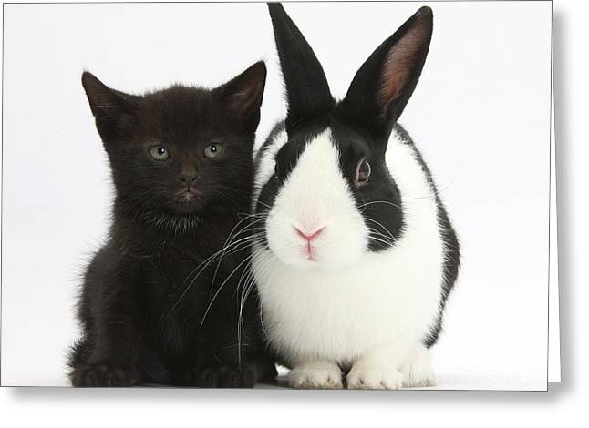 House Pet Greeting Cards - Black Kitten Dutch Rabbit Greeting Card by Mark Taylor